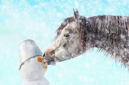 Horse snowman